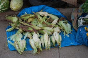 Ears of Fresh White Corn for Sale, Cuzco