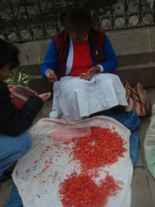 Ñuqch'u Flowers for Sale, Cuzco, Holy Week