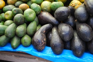Fuerte and Indigenous Avocados, Wanchaq market, Cuzco