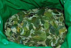Coca Leaves to Make an Offering to Mother Earth