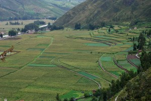 Fields in the Sacred Valley