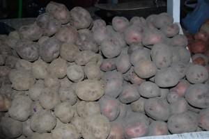Fresh Potatoes Still Covered in Dirt