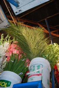 Flowers and Fronds for Sale