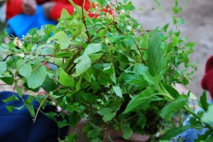 Asnapa: Bundle of Herbs