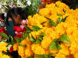 Yellow Flowers for the Pachamama