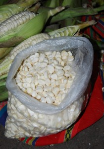 Fresh Corn kernels Ready for Peeling and Cook