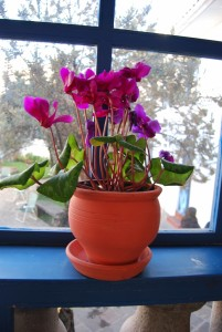 Potted Flowers in a Restaurant Window