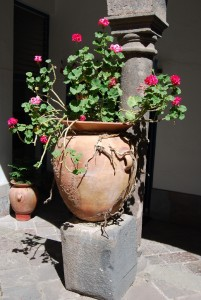 Potted Geraniums by the Column