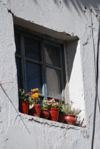 Potted Flowers in an Outside Window