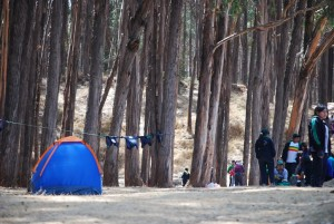 Camping Close to the Trees