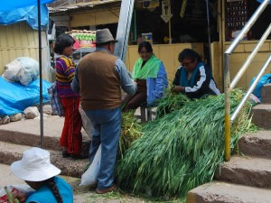 Buying Grass for Guinea Pigs in the Market