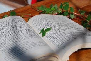 Clover Leaf in a Book as a Good Luck