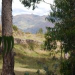 A Classic View by Cuzco Framed in Eucalyp