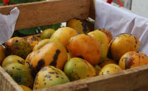Mangoes for Sale in the Market