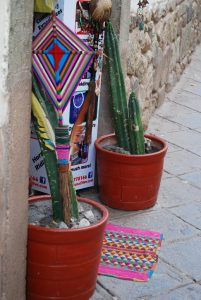 San Pedro Cactus as Protection in the Door of a Mystical Shop
