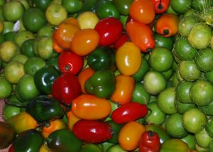 Red, Yellow, and Green Rocotos, against Limes