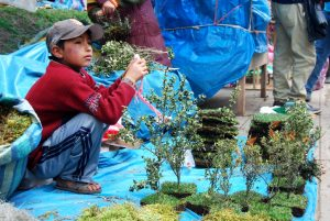 Boy Selling Small Christmas Trees