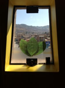Coca leaves Illustrated in a Window