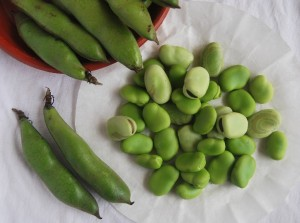 Peeled Broad Beans