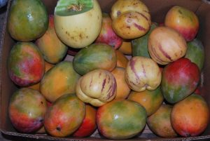 Mangos and Pepinillos