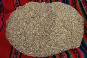 Quinoa Seeds For Sale