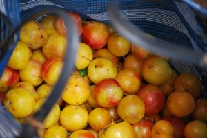 Yellow Plums in the Market