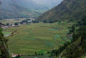Field in the Sacred Valley