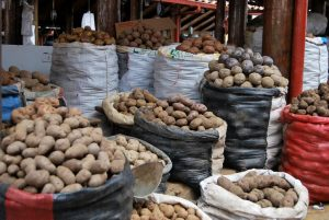 A Variety of Cuzco's Potatoes