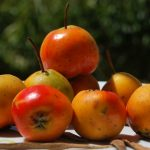 Enjoy the Loquat Fruit on Its Different Desserts 
