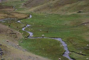 A Humid Pasture and Stream