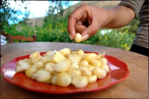 Boiled Corn (Mote) as Appetizer (Photo Walter Coraza Morveli)