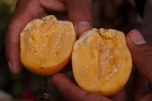 Sliced Cocona Fruit (Photo: Wayra)