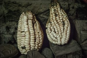 Corn as a Cannopa (Photo: Wayra)