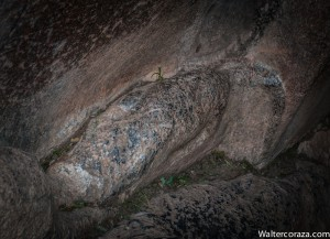 Headless Puma in the Rock (Photo: Wayra)