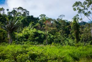 The Lowland Jungle where Gold is Found (Photo: Wayra)