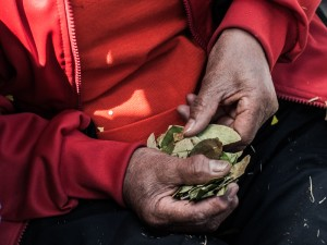 Coca Leaves (Photo: Wayra)