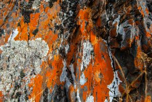 Colorful Lichen on a Rock (Photo: Wayra)
