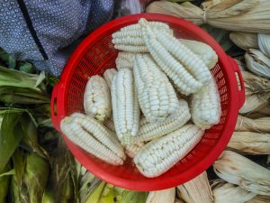 Fresh Sweet Corn from Cuzco (Photo: Wayra)