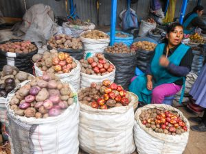 Variety of Potatoes for Sale in the Market (Photo: Walter Coraza Morveli)
