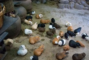 Guinea Pigs in the Kitchen (Photo: Walter Coraza Morveli)