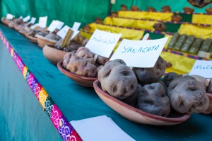 Varieties of Native Potatoes in Cuzco (Wayra)