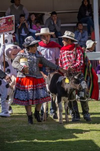 Promoting Livestock in Cuzco (Wayra)