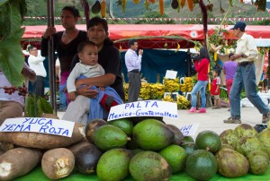 A Stand of Variety of Avocado and Yuca in the Fair