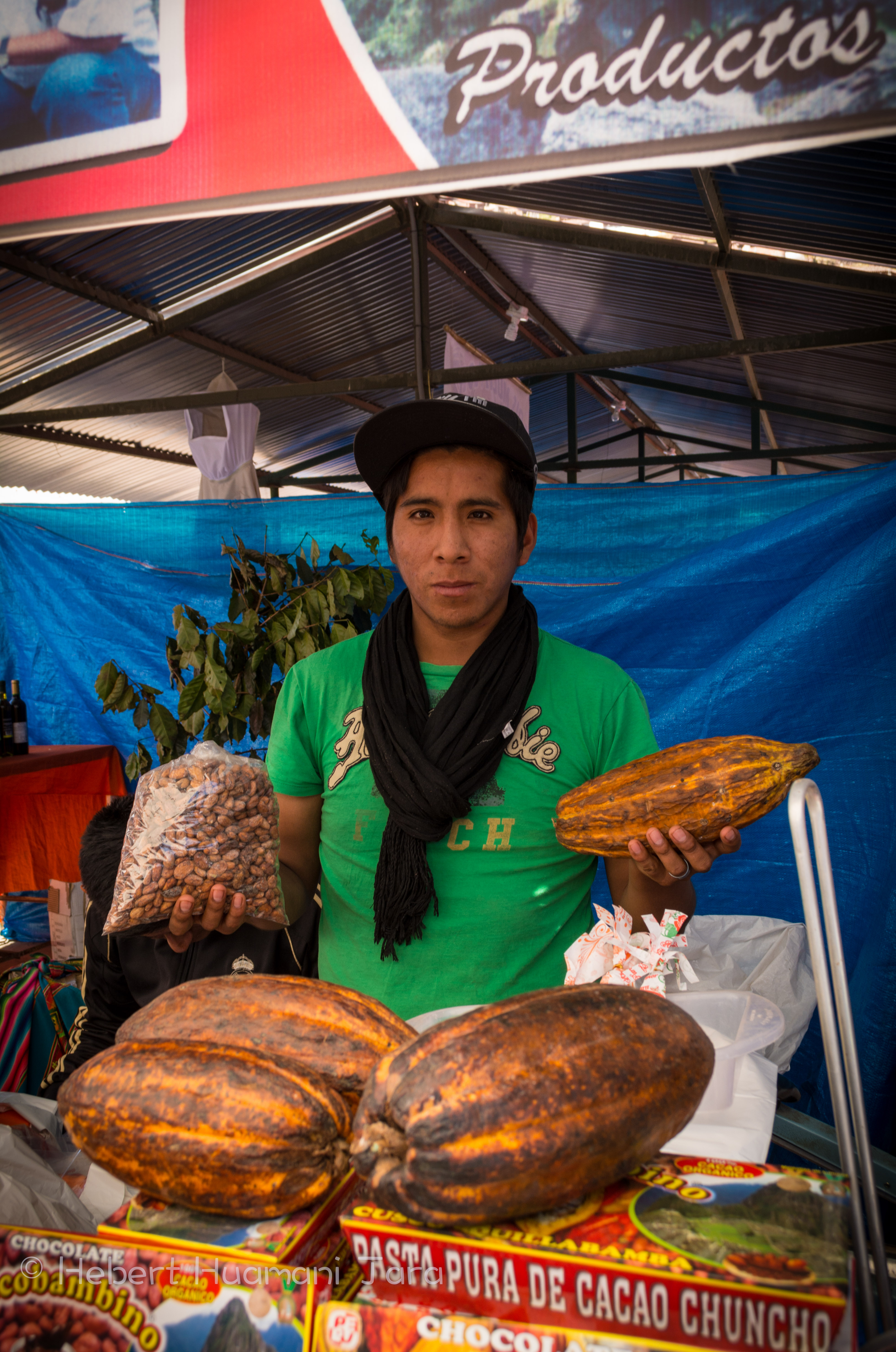 Showing the Cacao Pods