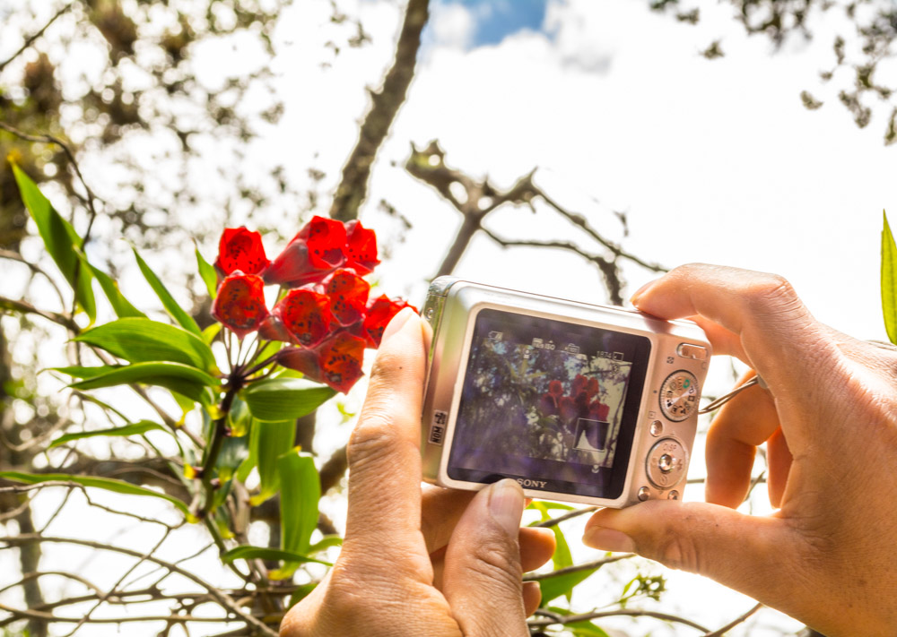 Taking a Picture of a Beautiful Flower (Hebert Edgardo Huamani Jara)