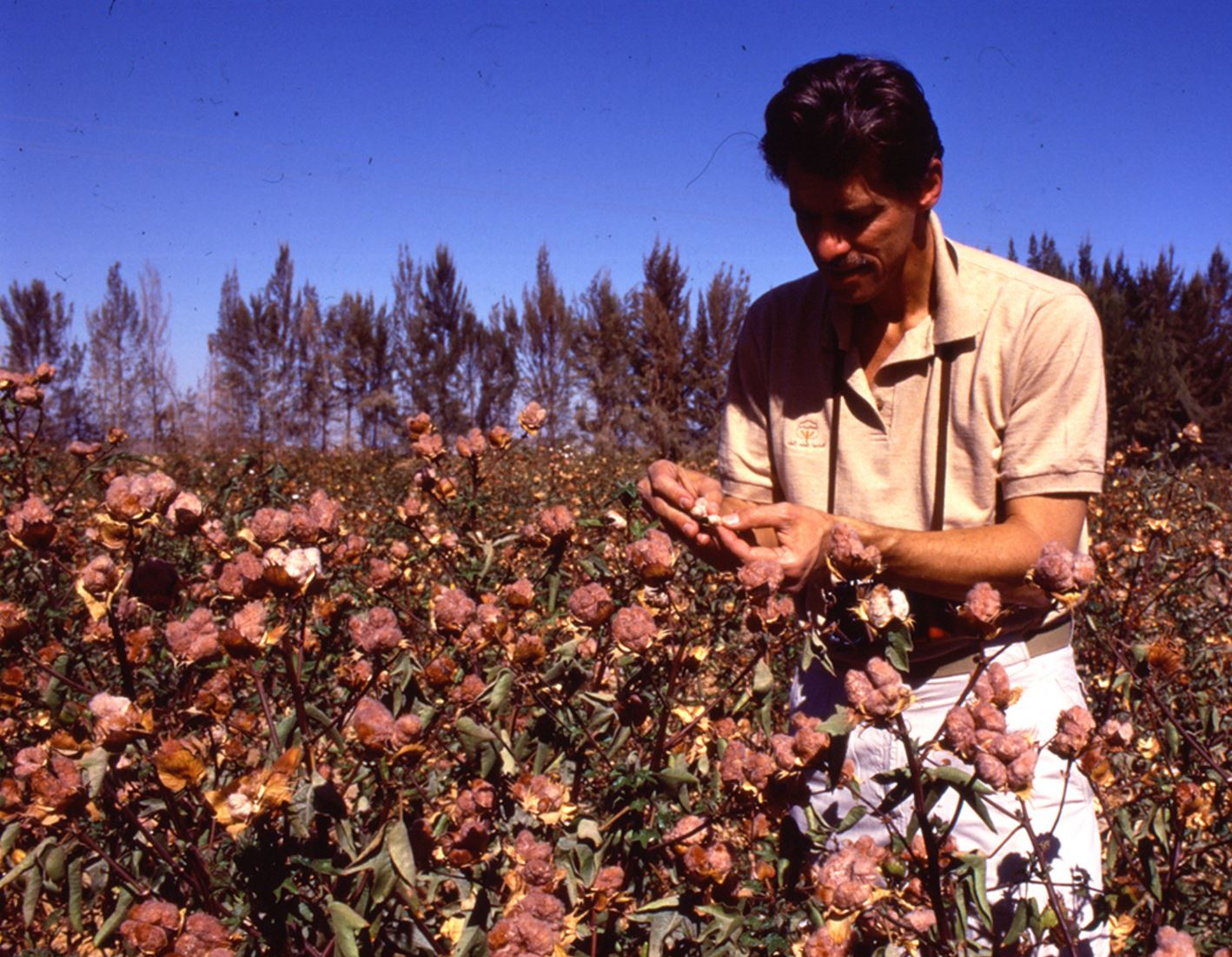 James M. Vreeland Checking Brown Peruvian Cotton